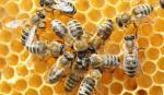 Okłady pszczele na 2016 rok