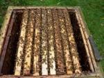 Sprzedam odkłady pszczele na rok 2017