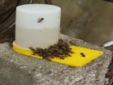 Prawidłowe Karmienie i Dokarmianie Pszczół