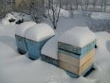 Ratowanie rodziny pszczelej bez pokarmu na przedwiośniu !