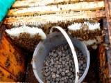 Wykorzystanie keramzytu w hodowli pszczół
