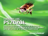 "RAPORT Greenpeace: ""Trudny los pszczół"
